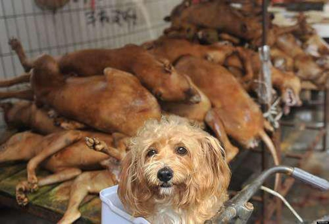Taiwan Bans Sell, Purchase, Eating Of Dog, Cat Meat