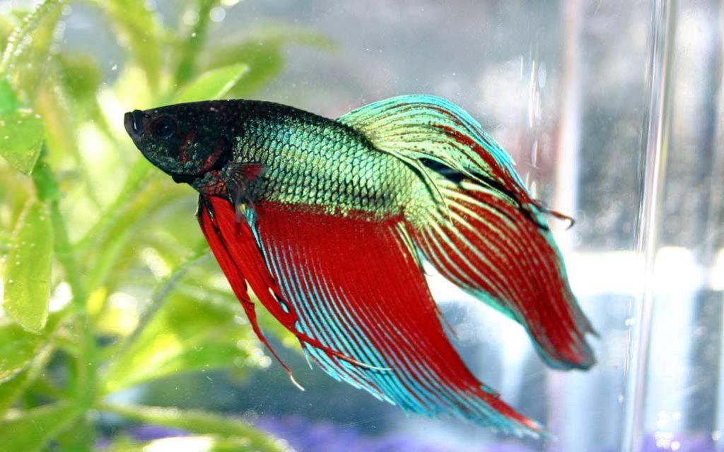 Fish-pets