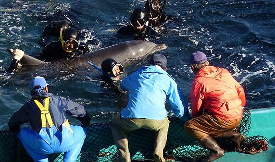 Review - The Cove, movie about slaughter in Taiji Japan