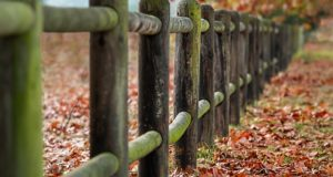 Why You Should Consider Post and Rail Fencing