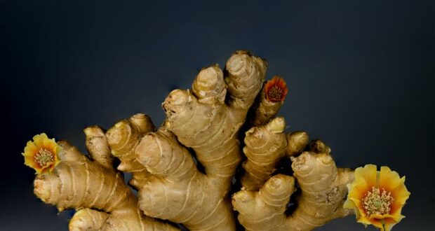 Study finds ginger relieves chemo nausea